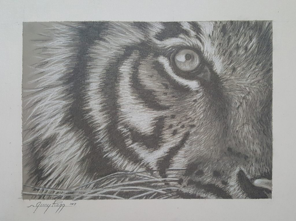 Tiger Eye Study